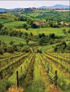 En vingård har Europas mest suksessrike rusbehandling.